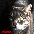 .:Sam:.